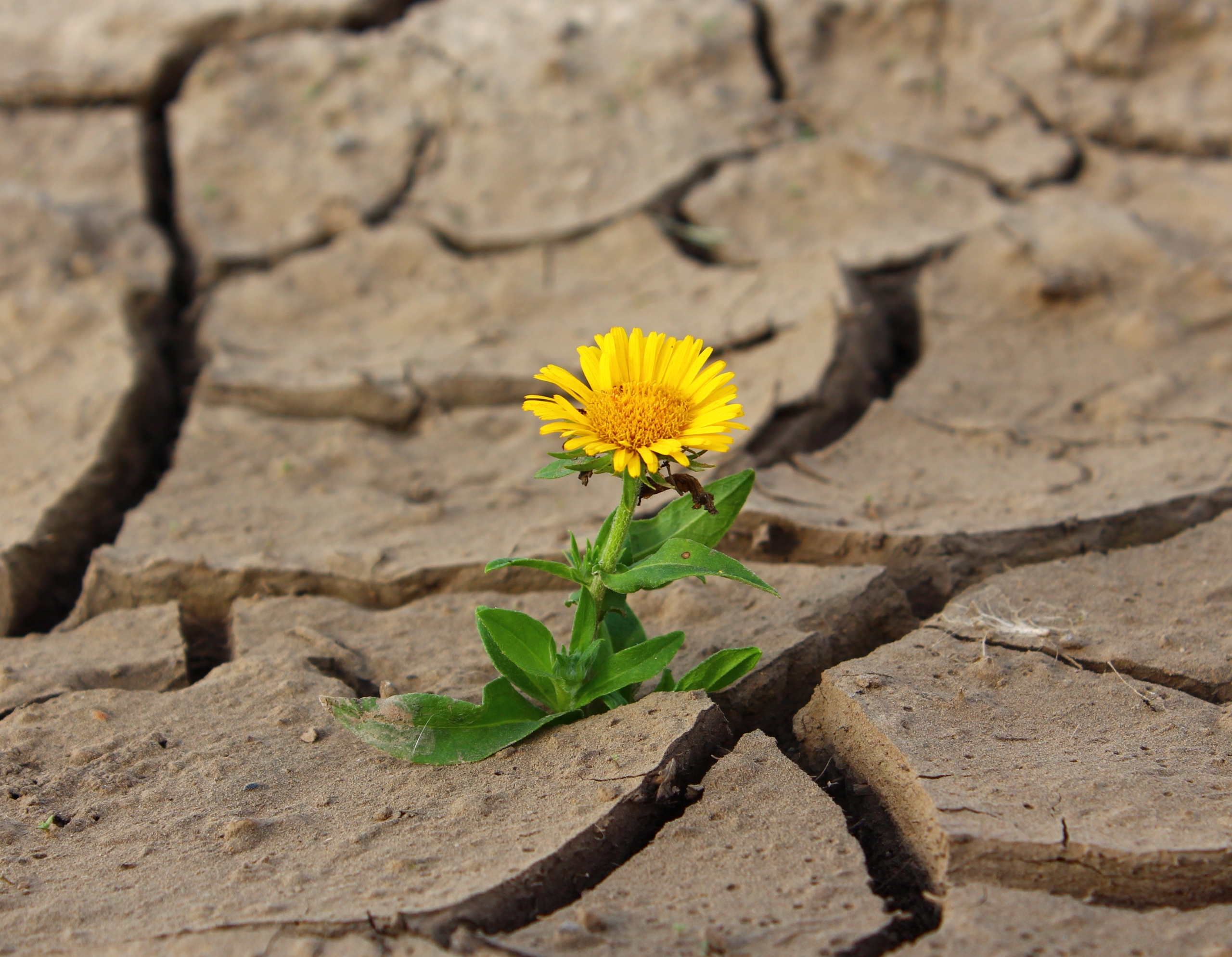 Read more about the article Positiv, aktiv, klar und energievoll in den Tag starten